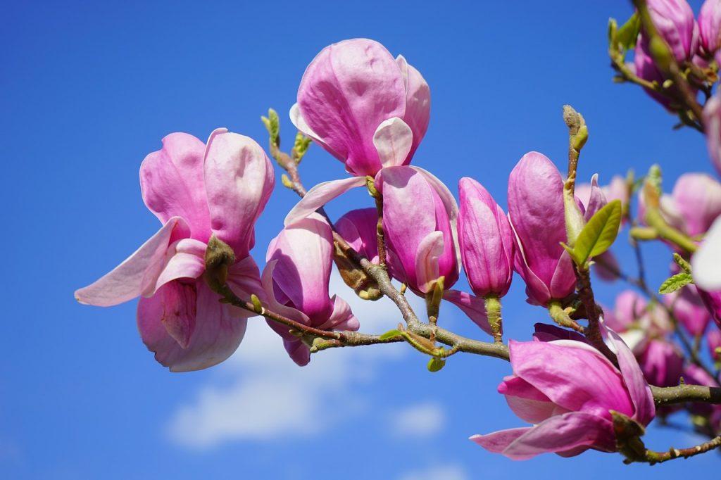 magnoliahof almere